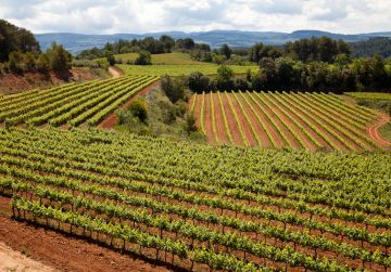 Freixenet innova en viticultura utilitzant imatges aèries